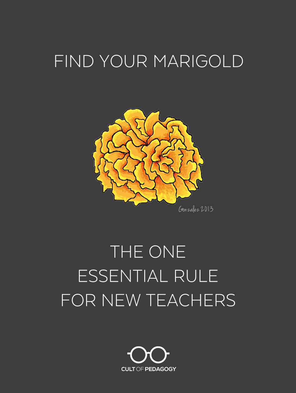 find your marigold the one essential rule for new teachers cult of pedagogy
